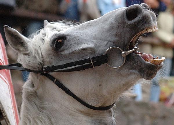 tai zirgo luosinimas