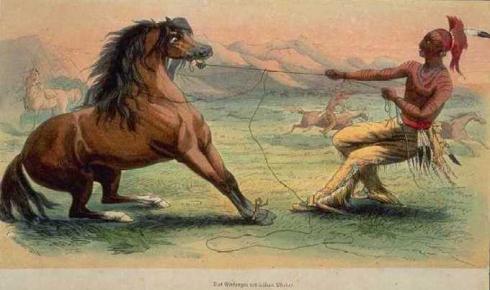 Mustangas zirgas