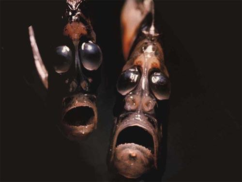 Vandens kirveliai - povandeninės Scary Movie versijos personažai? ©totallytop10.com