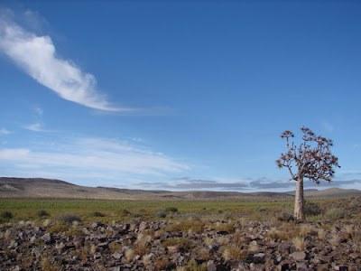 Pirmaisiais pasaulio gyvūnais laikomų organizmų fosilijų rasta Namibijos Etosha nacionaliniame parke ©safari-in-africa.blogspot.com