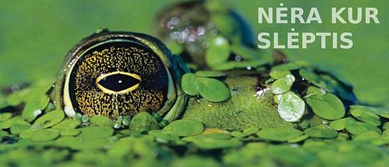 Amfibijų populiacijas visame pasaulyje šluote šluoja mirtina liga – bet iš kur ji atsirado?