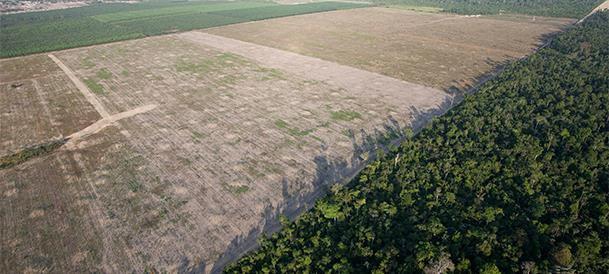 Šitaip atrodo iškirstų miškų masyvai Brazilijoje.  ©AP