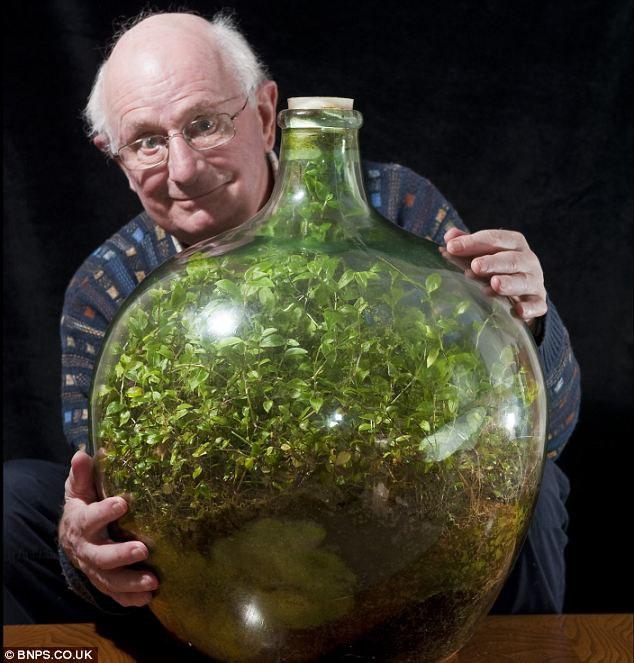 Deividas Latimeris (David Latimer) sodą butelyje įveisė 1960 m. Šv. Velykų sekmadienį.