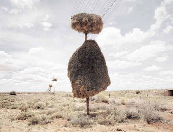 Paukščių audėjų daugiabučiai išsilaiko ir 100 metų  ©Dillon Marsh/Rex Features