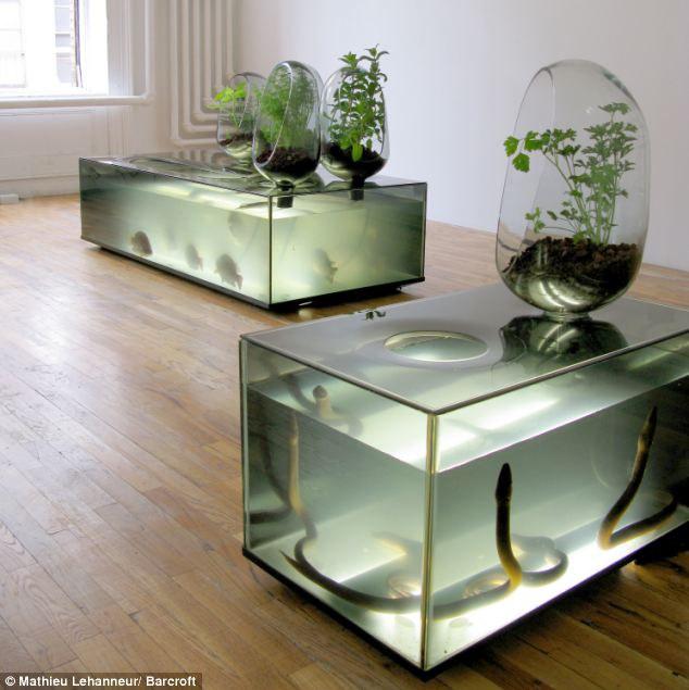 šviežios ir gyvos daržovės bei žuvys – tiesiai iš kambario.