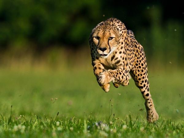 Rečiausias gyvūnas pasaulyje