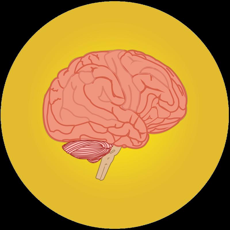 smegenų prekybos sistema 7 0)
