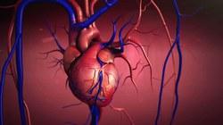 Kardiologai įspėja 40-mečius ir vyresnius: tai rimta – jei nenorite staiga mirti, metas imtis priemonių