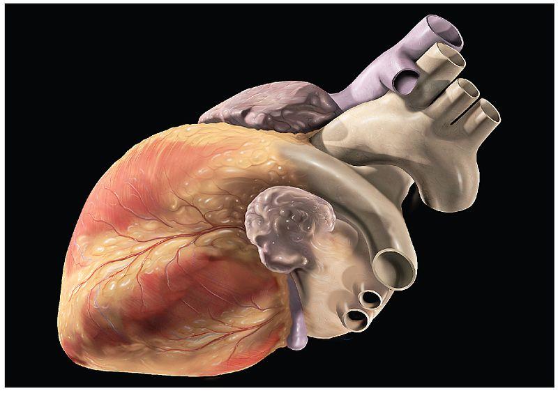 irano organų prekybos sistema)